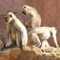 monkeys_200