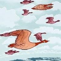 birds-200